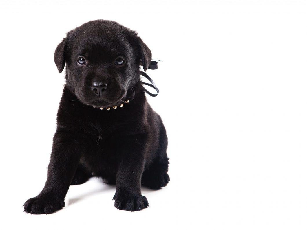 犬に舐められて両手足切断の感染症はカプノサイトファーガ?どんな症状かも調査!
