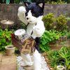 むぎ(猫)がかわいい!沖縄の天国帰りの猫の飼い主は米須雄作?